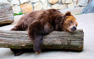 Беби-бум и генеральная уборка: как встречает весну Московский зоопарк