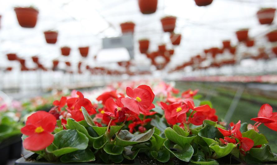 Живое украшение города: в столице высадят почти 55 миллионов цветов. Официальный сайт Мэра Москвы