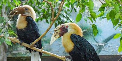 В Московском зоопарке впервые вылупился птенец папуанских птиц-носорогов