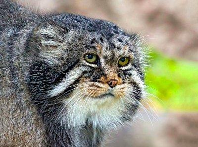 Пушистый символ: в Московском зоопарке вновь появился зверь-талисман