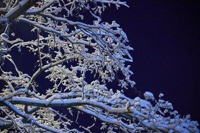 Мокрый снег, ветер, гололедица: в столице ухудшается погода