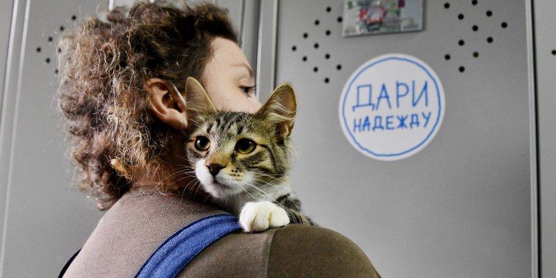Ласковые кошки и умные собаки. Как устроен приют для животных
