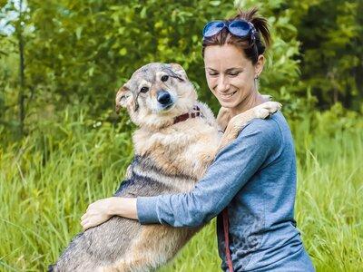 Как волонтеры помогают бездомным животным