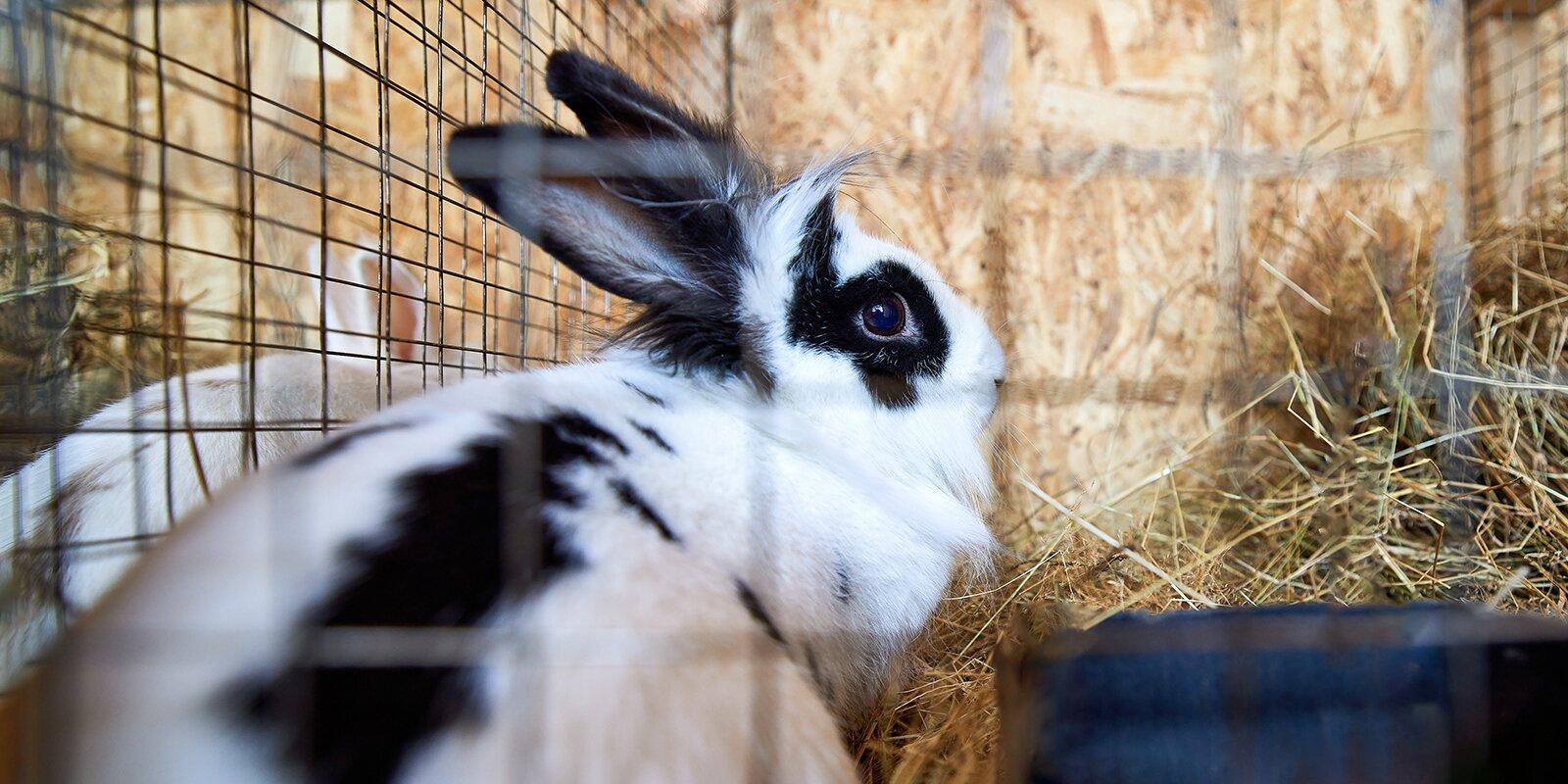 День кролика: ветеринары рассказали, как ухаживать за ушастыми питомцами